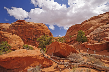 red rock: Red Rock Canyon Panorama in Arches National Park in Utah