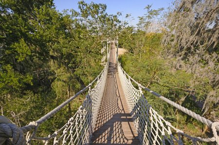 Canopy Walk in a Subtropical Forest in the Santa Ana Wildlife Refuge in Texas Stock Photo