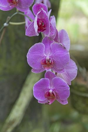 Orchids in the Tropics in the La Paz Wildlife Refuge in Costa Rica
