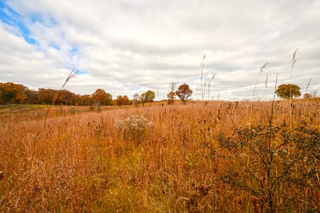 Prairie grass in Fall Colors at the International Crane Foundation near Baraboo, Wisconsin