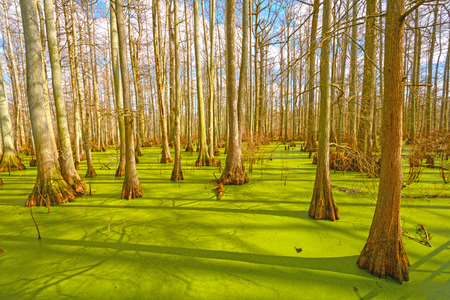 Sun Breaking Through on a Cypress Swamp in the Cache River Natural Area at Heron Pond in Illinois Stock Photo