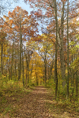 Quiet Path in the Forest in Blue Mound State Park in Wisconsin