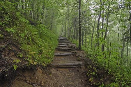 appalachian: Foggy Appalachian trail in Great Smoky Mountains National Park in North Carolina