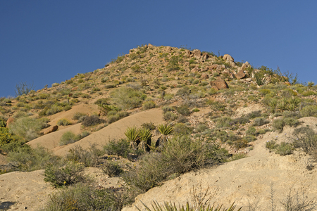 joshua: Rocky Hill in the Desert in Joshua Tree National Park in California