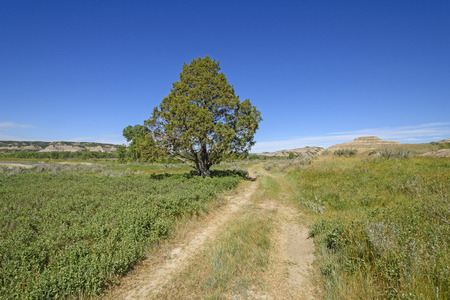Old Wagon Road in the Prairie in Theodore Roosevelt National Park in North Dakota Stock Photo