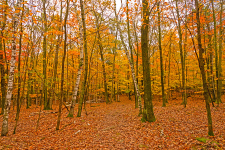 Colorful Leaves on the Trees and the Ground in Potawatomi State Park in Wisconsin Stock Photo