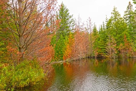 Herfstkleuren op Jenny Lake Overstroomd door een Beaver Dam in de grenswateren in Minnesota