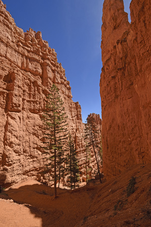 Dramatic Shadows in a Red Rock Canyon in Bryce Canyon National Park in Utah Stock Photo