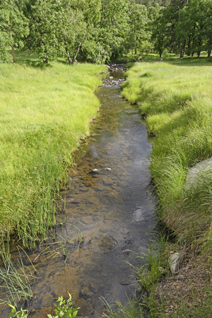 Quiet Stream in the Mountains in the Black Hills in Custer State Park in South Dakota 免版税图像