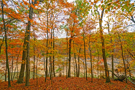 Fall Colors on a Secluded Ridge in Mark Twain State Park in Missouri