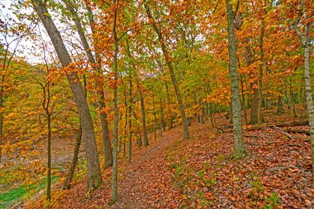 Quiet Path in the Fall Forest in Mark Twain State Park in Missouri 版權商用圖片