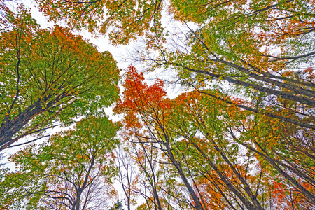 Colorful Fall Canopy on a Cloudy Day in Mark Twain State Park in Missouri 版權商用圖片