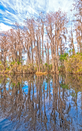 Reflections in the Calm Waters of a Okefenokee Swamp in Georgia