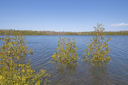Trees in a Flooded Marr Lake in Bruce Peninsula National Park in Ontario