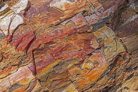 Petrified Rock Close-up in Escalante Petrified Forest in Utah