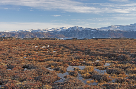 Tundra Wetlands in the High Arctic nera Equip Sermia in Greenland