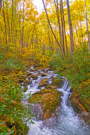 Rushing Stream Running Through the Rocks and Leaves of the Fall Forest in the Great Smoky Mountains National Park in North Carolina Imagens