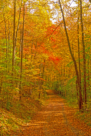 Secluded Forest Road in the Fall in Great Smoky Mountains National Park in North Carolina