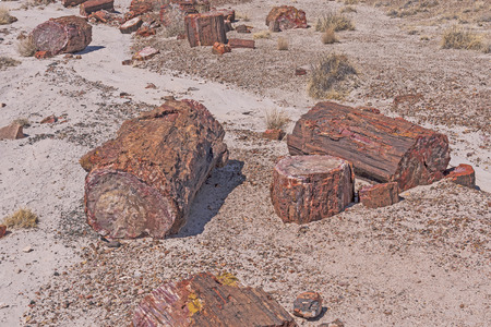 Petrified Wood log Samples in the Desert in Petrified Forest National Park in Arizona