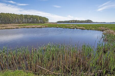 Forest, Wetland Marsh, and Spring Growth in the Marsh Grass in Blackwater National Wildlife Refuge in Maryland 스톡 콘텐츠
