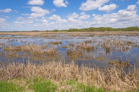 Looking Across a Wisconsin Wetland in Horicon Marsh in Central Wisconsin