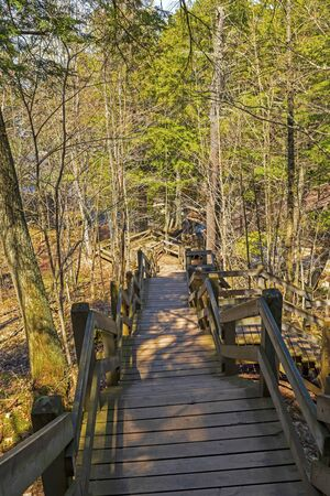 Stairway on a Forest Trail in Porcupine Mountains State Park in Michigan