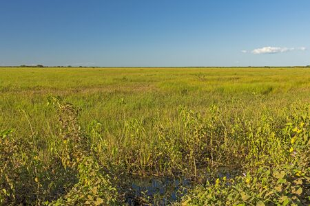 Looking out over the grasslands of the Pantanal in Brazil