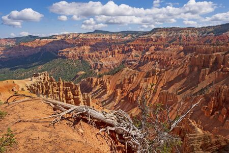 Spectacular Canyon behind a Bristlecone Pine Tree in Cedar Breaks National Monument, in Utah