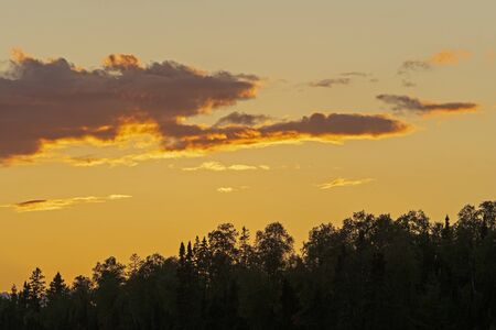 Golden Clouds over Silhouetted Trees on Caribou Lake in The Boundary Waters in Minnesota 免版税图像