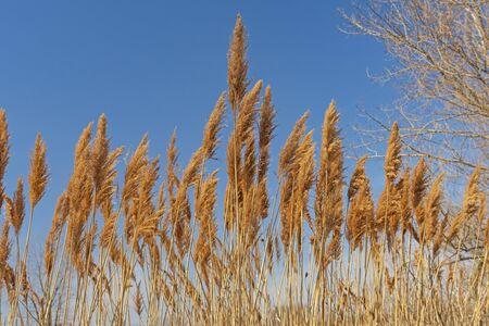 Prairie Grasses in the Sun in Midewin National Tallgrass Prairie in Wilmington, Illinois