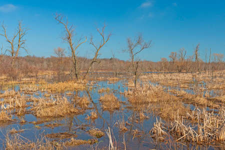 Early Morning Views of a Wetland Marsh in Indiana Dunes National Park in Indiana