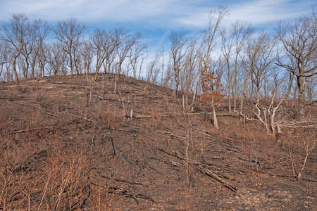 Charred Remains after a Ground Fire in Indiana Dunes National Park in Indiana