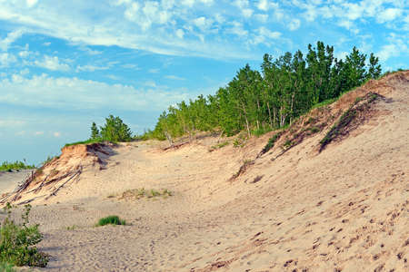 Young Forest Taking Hold on a Sandy Shore in Sleeping Bear Dunes National Lakeshore in Michigan
