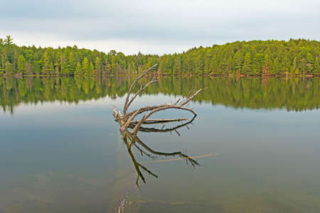 Clear and Calm Waters in the North Woods on High Lake in the Sylvania Wilderness in Michigan