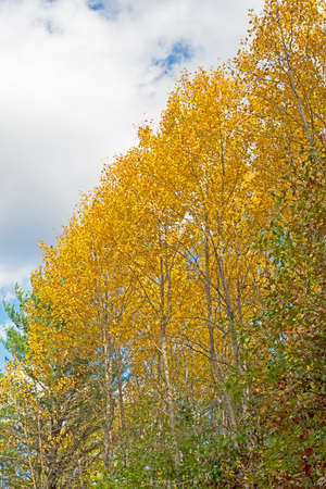 Brilliant Yellows Against the Sky in Governor Thompson State Park in Wisconsin
