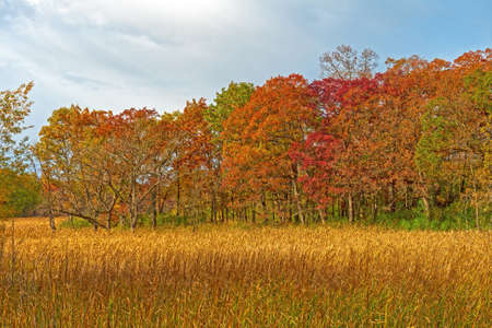 Fall Colors and Marshland Grass in Moraine Hills State Park in Illinois Reklamní fotografie