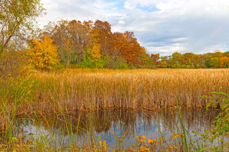 Changing Colors Around a Wetland Pond in Moraine Hills State Park in Illinois