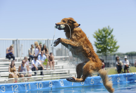 doggies: June 22, 2014; Dock dogs dog high jump competition at Sugar Beach, Toronto, Ontario. Part of the Harbourside Festival. Photo Peter Llewellyn