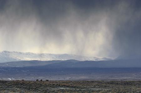 desert ecosystem: Storm over the high desert, , Sand Wash Basin, Colorado, USA