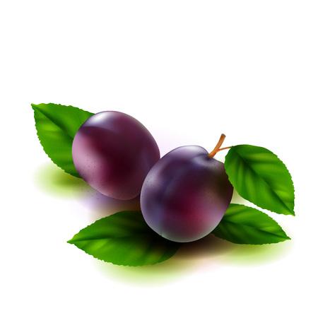 Prugne realistiche frutta con foglie isolate su sfondo bianco. Illustrazione vettoriale.