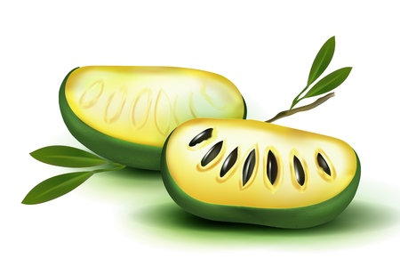 Photo Realistic 3d vector pulp and seeds with leaves. Isolated on white background papaya papaw fruit asimina triloba , custard apple, or pawpaw plant carica papaya, genus carica.