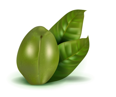 Realistic ambarella 3d vector fruit with leaves isolated on white background.