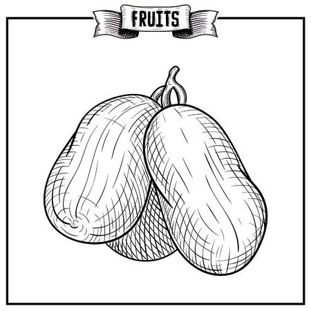Retro engraving hand drawn vector illustration of isolated fruit. Detailed vegetarian product collection for advertising campaign design.