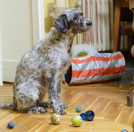 Dog sitting among bunch of toys. Stock Photo