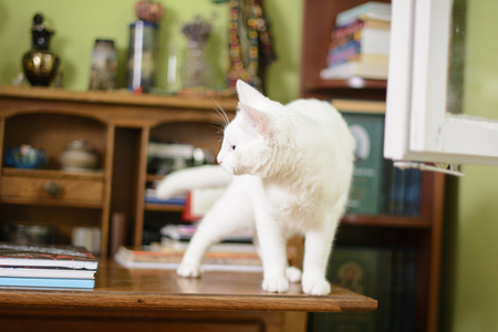 Cat is standing on an escritoire. Something attracted cat's attention. Stock Photo