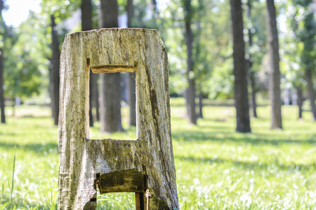 Stump in the park