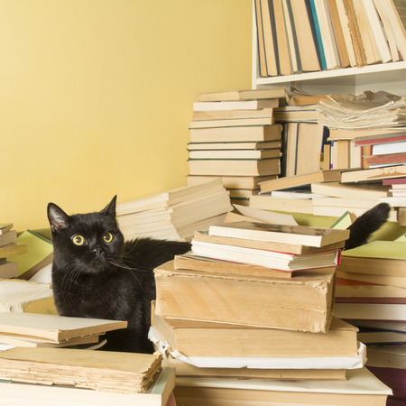 visible: Black cat lying in a pile of books. A part of the bookshelf is visible. Selective focus. Stock Photo