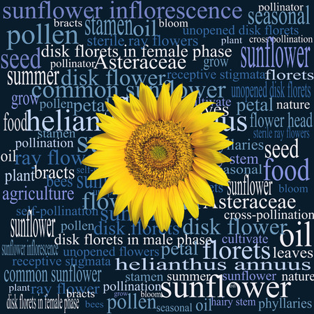 Sunflower head on a word cloud full of botanical terms, expressions, and syntagmas relating to that particular part of a sunflower plant, and to the common sunflower in general.