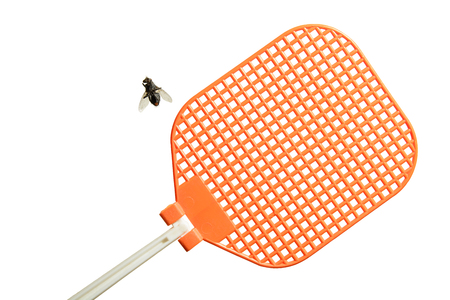 Dead flesh fly is lying on its back next to an orange fly swatter. Isolated on white background. Фото со стока