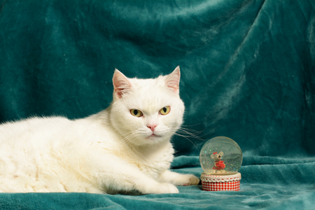 White female cat is lying on a dark aquamarine blanket, next to a crystal snowball with a mouse in it.  On a checkered mount of the crystal snowball, there is a lace border.